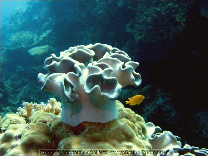1-coral-0804-m2-great-barrier-reef.jpg