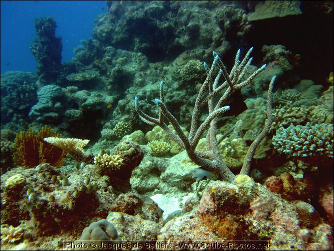 1-coral-1283-m1-great-barrier-reef.jpg
