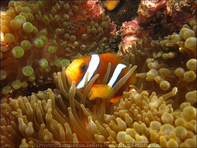 5-clownfish-1336-great-barrier-reef.jpg