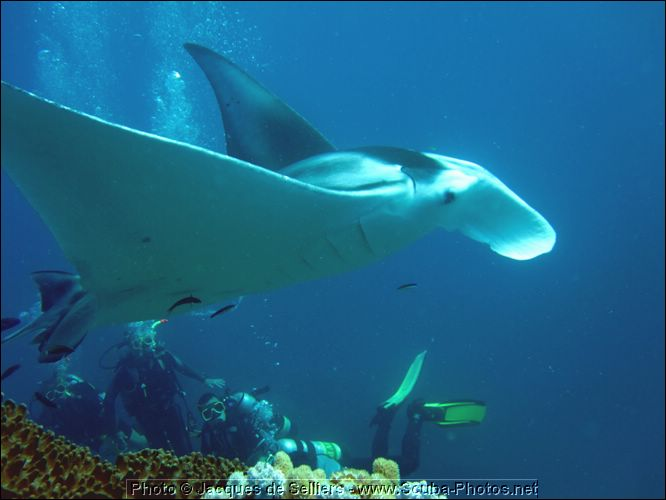 8-manta-ray-5205-m1-great-barrier-reef.jpg
