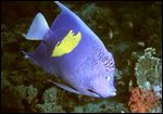 red-sea-2003-297-cr.jpg