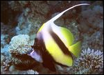 red-sea-2003-305-cr.jpg