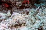 red-sea-2003-311-cr.jpg